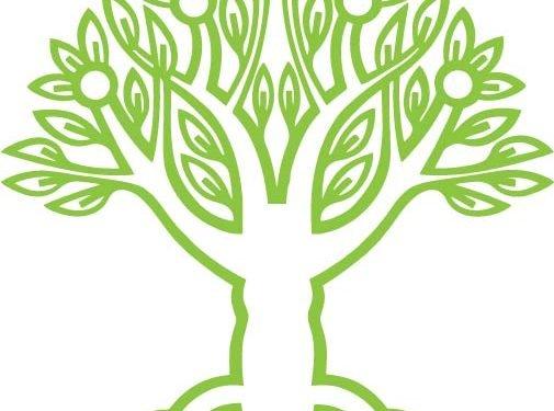 maharishi school tree of knowledge