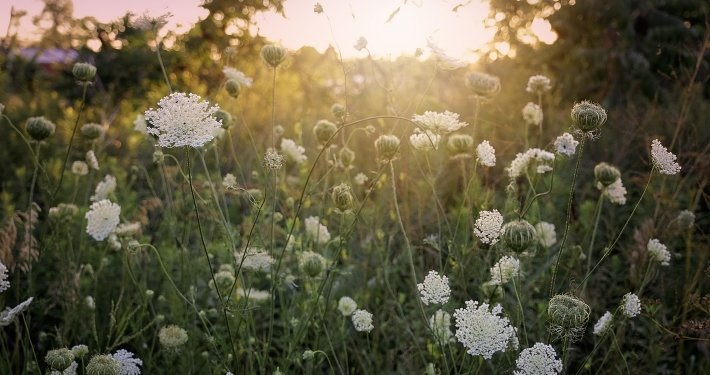 summer in fairfield iowa