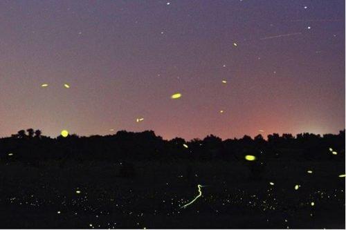 Fireflies at dusk by Maharishi School alumni Taylor Ross. https://www.instagram.com/p/BXDh2goDXC8/?taken-by=taylorlmross